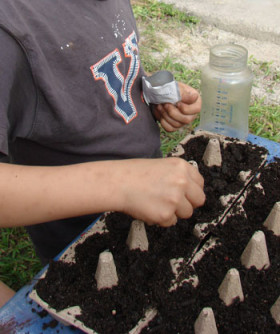 child planting seeds in egg carton