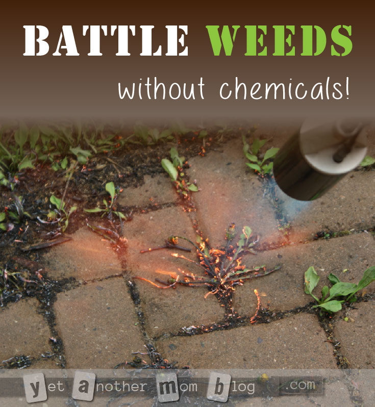 Battle Weeds - without chemicals... or breaking your back! You will win the war against weeds with this tool!