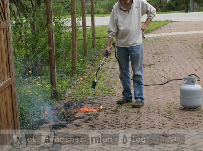 Getting rid of weeds with a propane garden torch