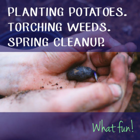 Planting Potatoes. Torching Weeds. Spring Cleanup. What fun!