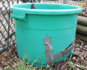 Planting-Potatoes-in-an-old-plastic-tub