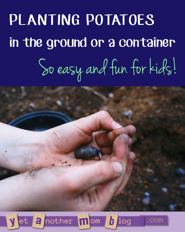 Planting Potatoes in the ground or a container. So each and fun for kids! Plus, using a garden torch to battle weeds.