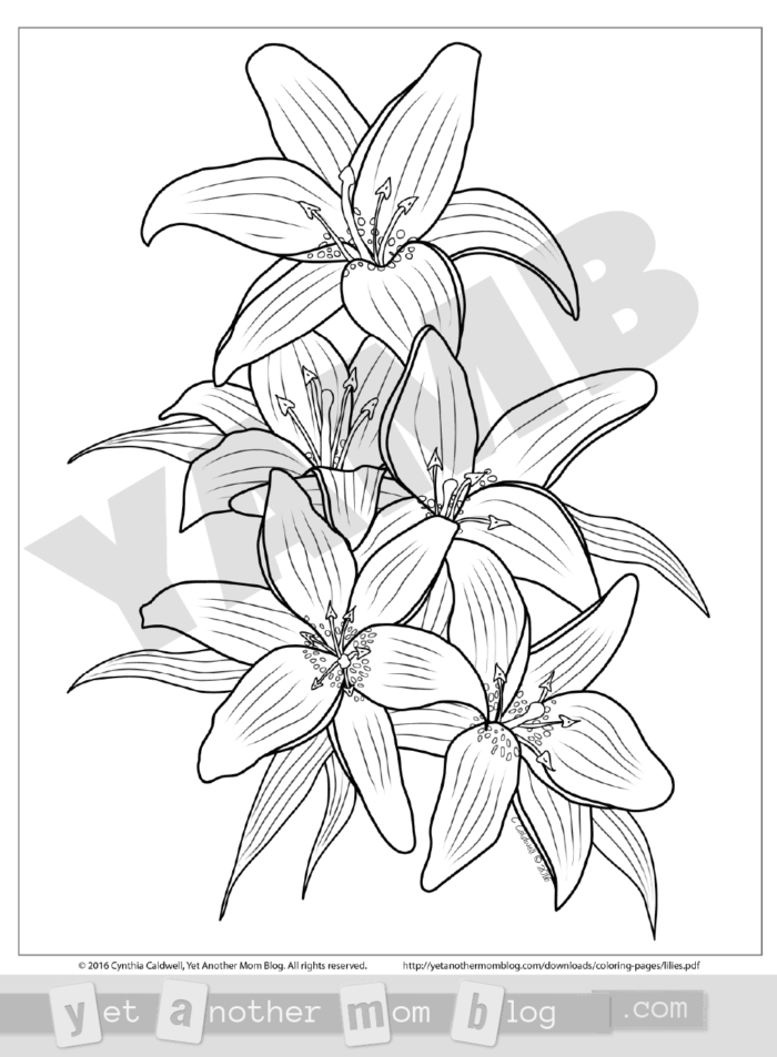 Free PDF download lilies coloring page. Graceful lilies - the perfect spring flower for adults to color for Easter!
